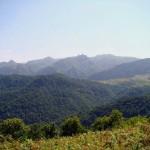 Laton Jungle in Gilan