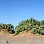 Lut Desert: Nebkha