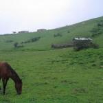 The nature of Masuleh