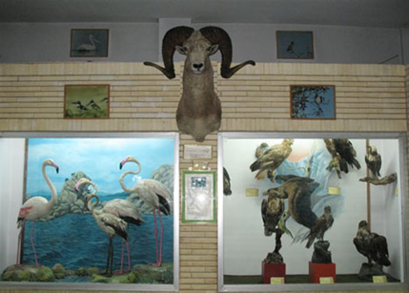 موزه تاریخ طبیعی تبریز