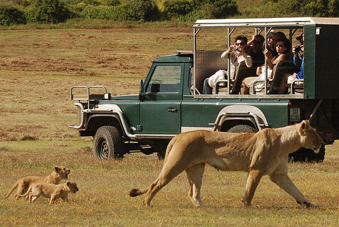 اسکوتیا سافاریس Schotia Safaris Private Game Reserve