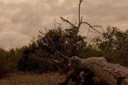 تیمبواتی Timbavati Game Reserve