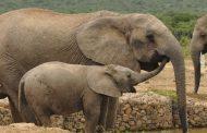 پارک ملی آدو الفنت Addo Elephant National Park