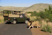 پارک ملی پیلانسبرگ Pilanesberg National Park