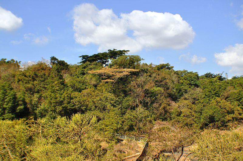 باغ گیاه شناسی ملی لوولد Lowveld National Botanical Garden