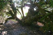 درخت دفتر پست Post Office Tree