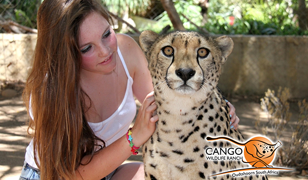 مرتع حیات وحش کانگو Cango Wildlife Ranch