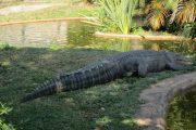 پارک خزنده پریز بریج Perry's Bridge Reptile Park
