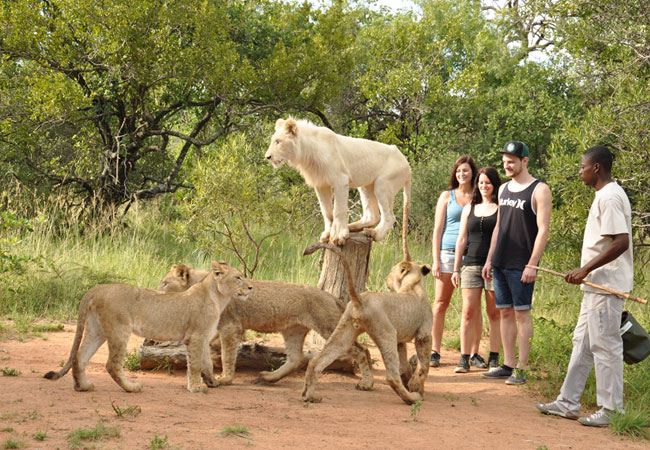 پارک شیر Lion Park