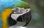 پرندگان بهشت Birds of Eden
